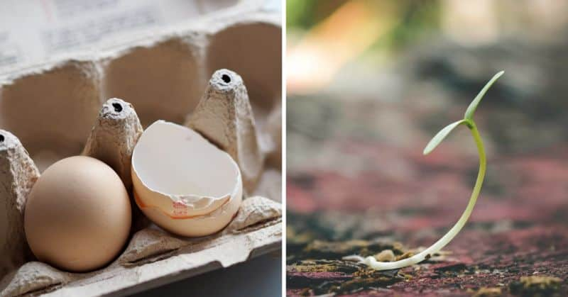 create-eco-friendly-seed-starters-1-how-to-make-eco-friendly-seed-starters-using-eggshells