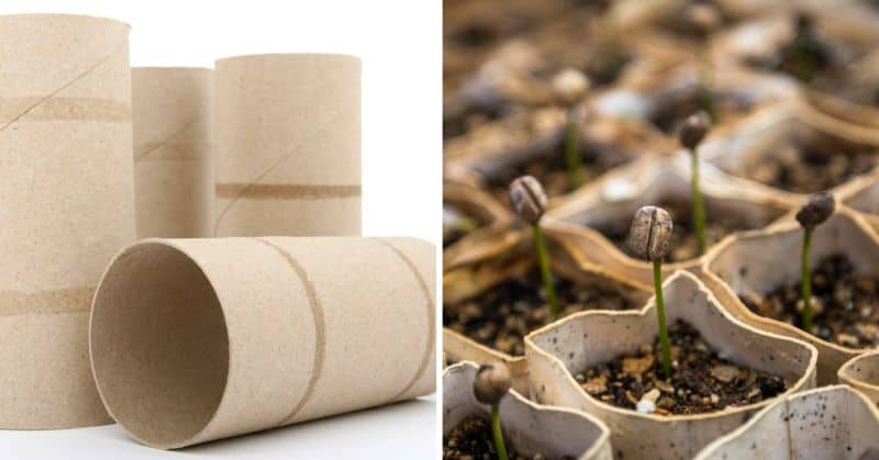 create-eco-friendly-seed-starters-3-how-to-make-eco-friendly-seed-starters-using-toilet-paper-tubes