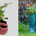 Seven Everyday Alternatives to Plant Pots