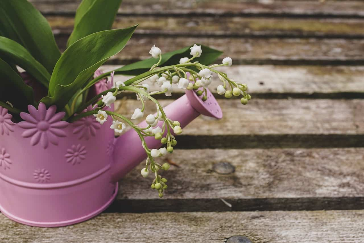 diy-plant-pot-alternatives-5-watering-can