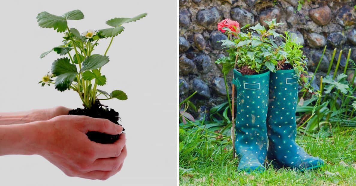 diy-plant-pot-alternatives