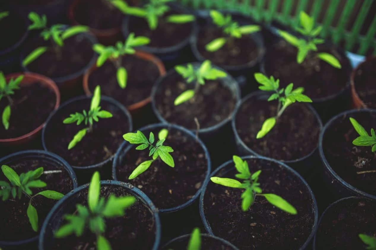 diy-seed-starting-mix-2-main-ingredients