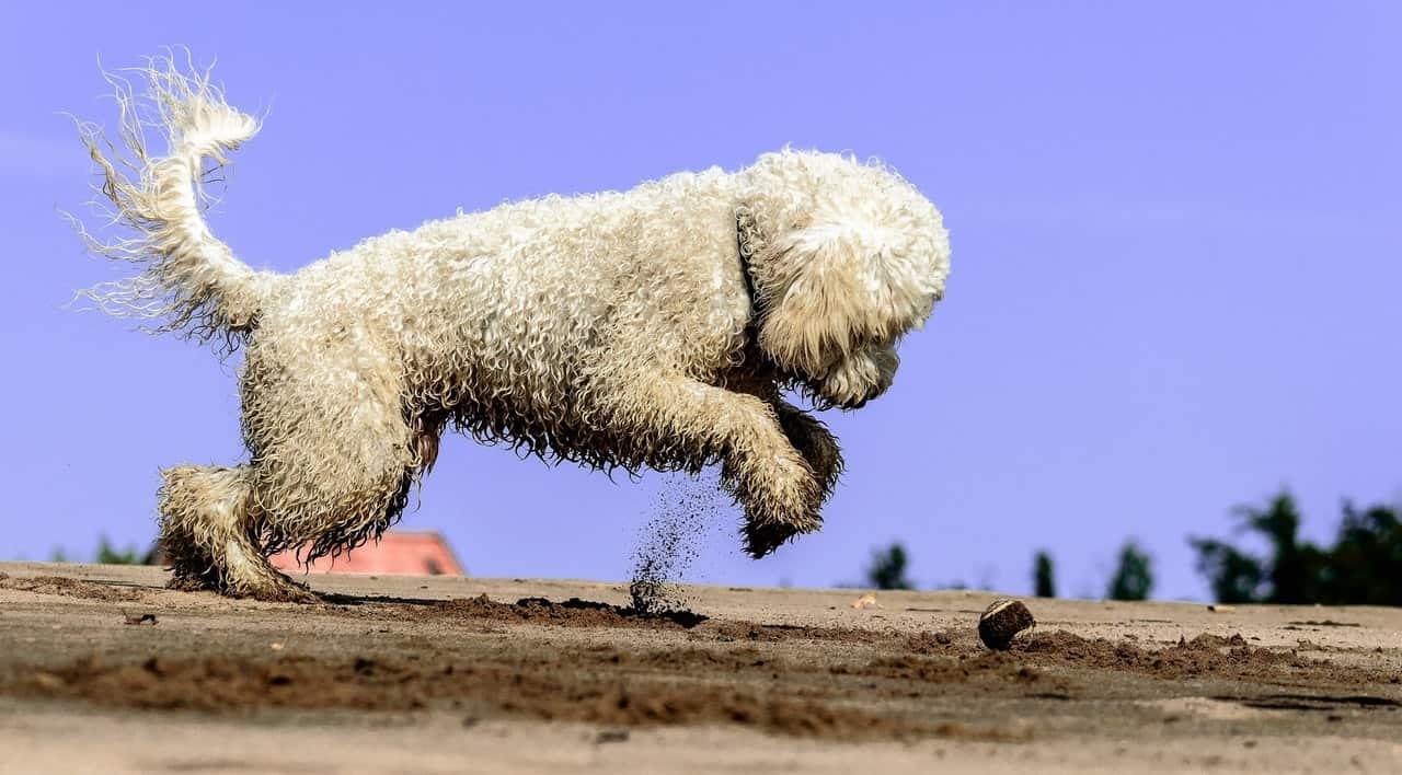 dog-friendly-garden-tricks-4-utilize-raised-beds