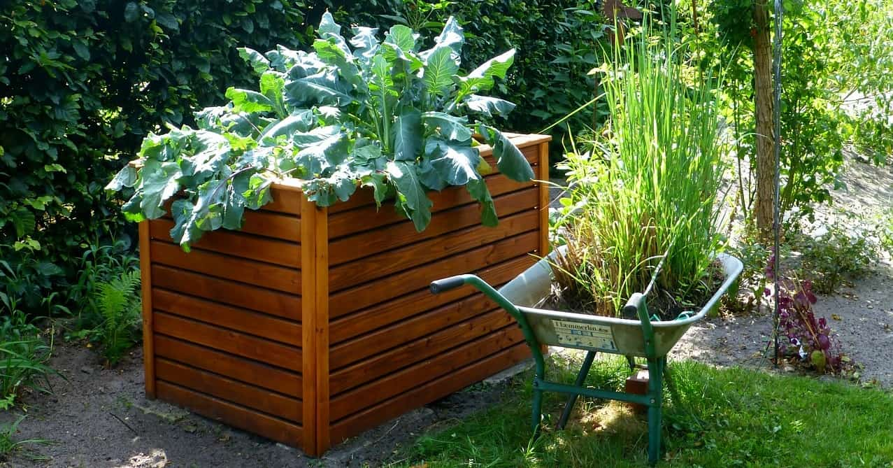 dog-friendly-garden-tricks-4-utilize-raised-beds