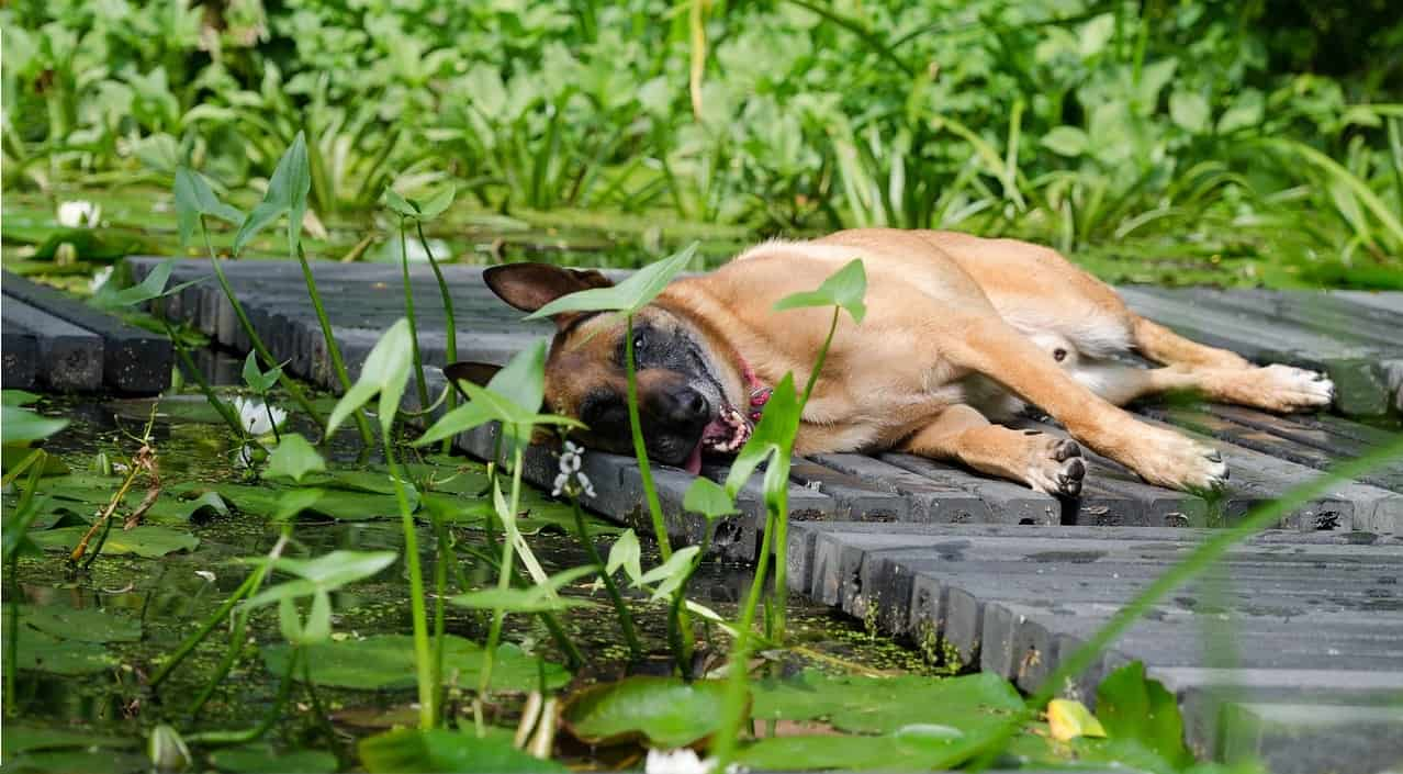 dog-friendly-garden-tricks-7-cover-ponds-pools-when-not-in-use