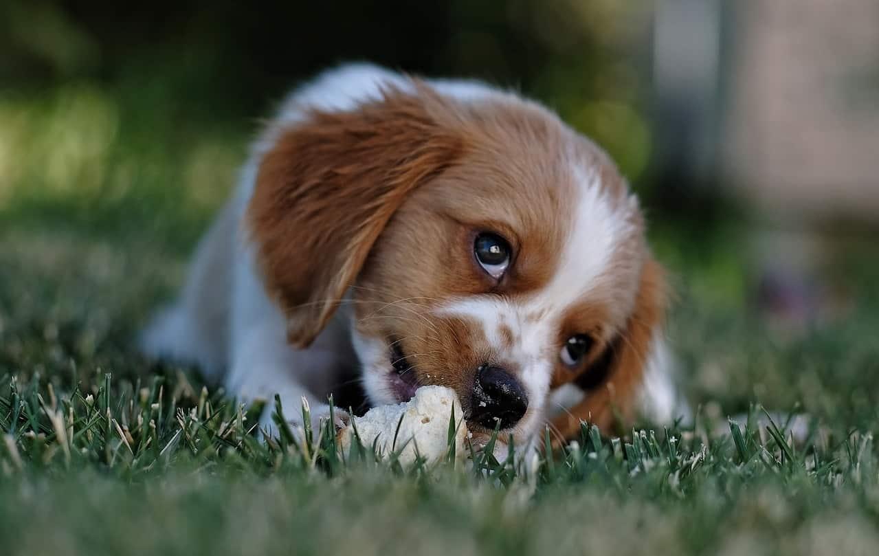 dog-friendly-garden-tricks-8-choose-strong-self-repairing-grasses