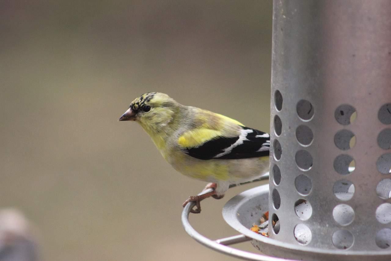 easy-garden-makeover-15-bird-feeder