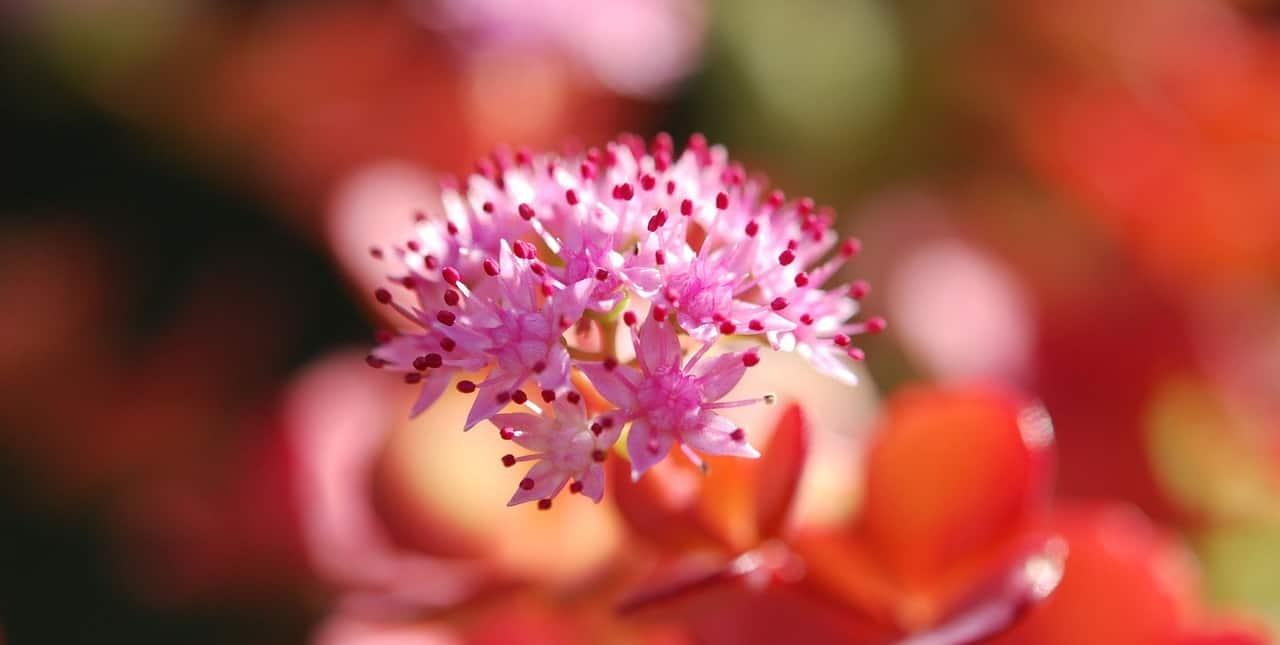 easy-garden-makeover-8-plant-perennials