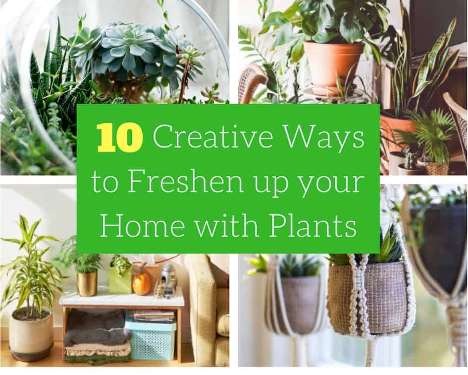 10 Creative Ways to Freshen up your Home with Plants