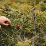 Foraging Guide – How to Make the Most of the Hedgerows