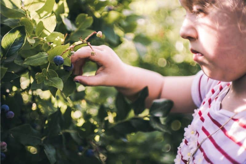 foraging-guide-make-the-most-of-the-hedgerows-1-foraging-food-in-the-uk