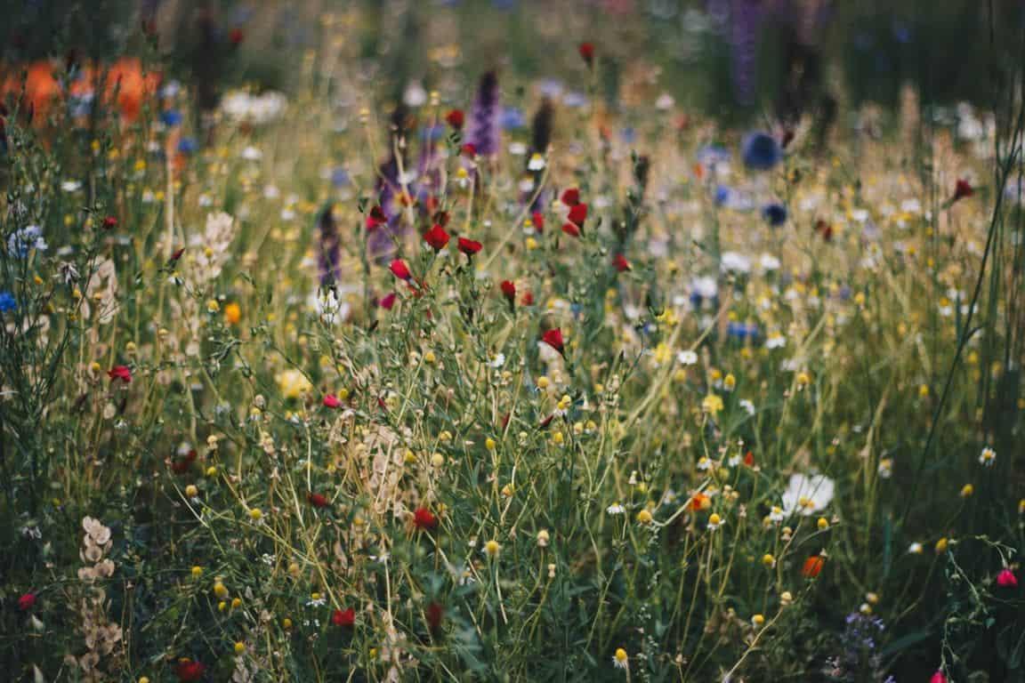 garden-wildlife-watching-room-2-grow-right-plants-pexels