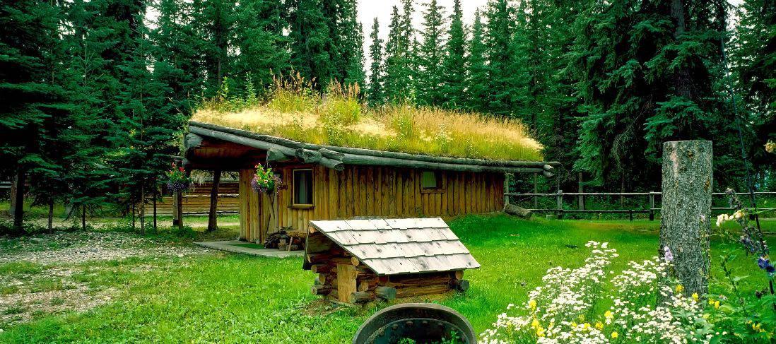 garden-wildlife-watching-room-5-create-green-roof-pixabay