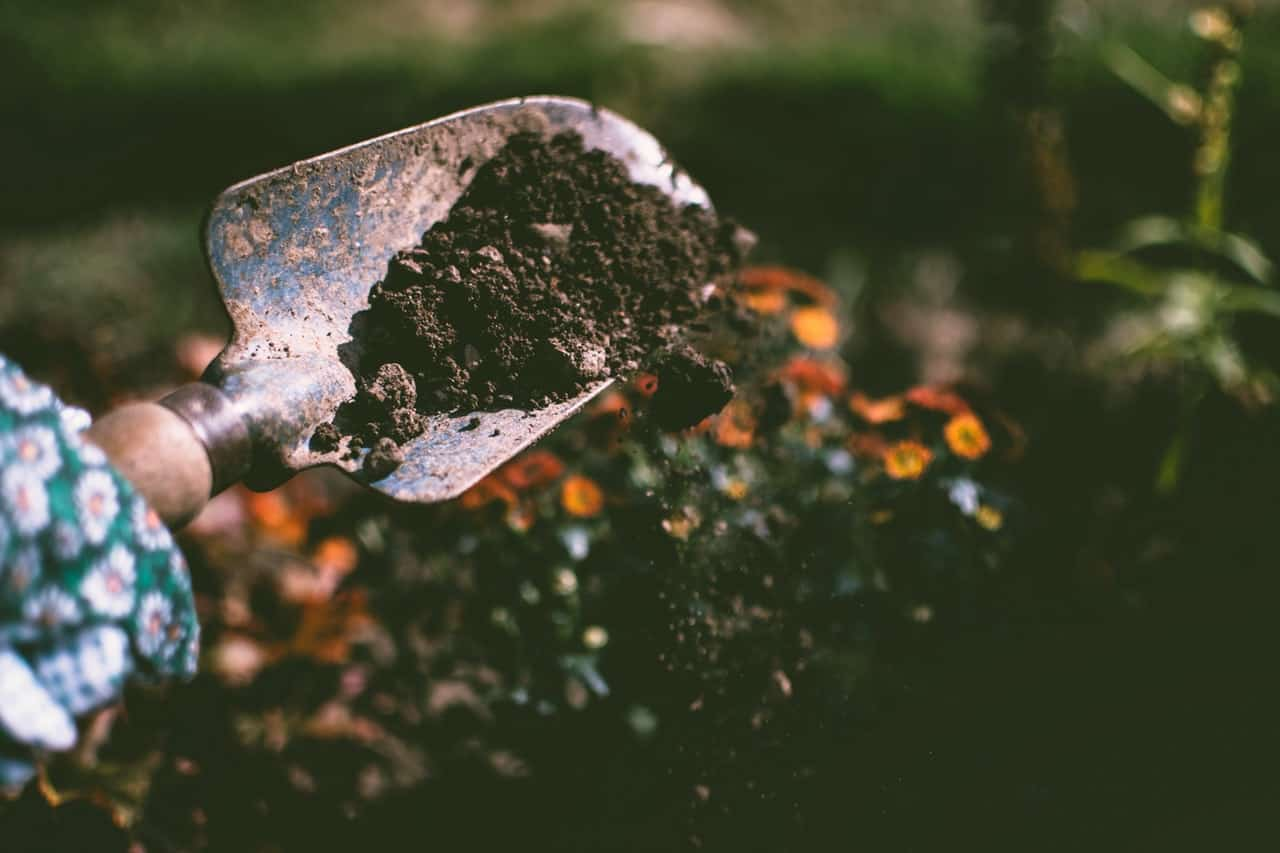 gardening-jobs-for-january-1-dig-vacant-plants-pixabay