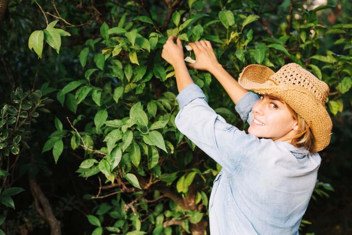 gardening-jobs-for-january-2-prune-apple-pear-freepik