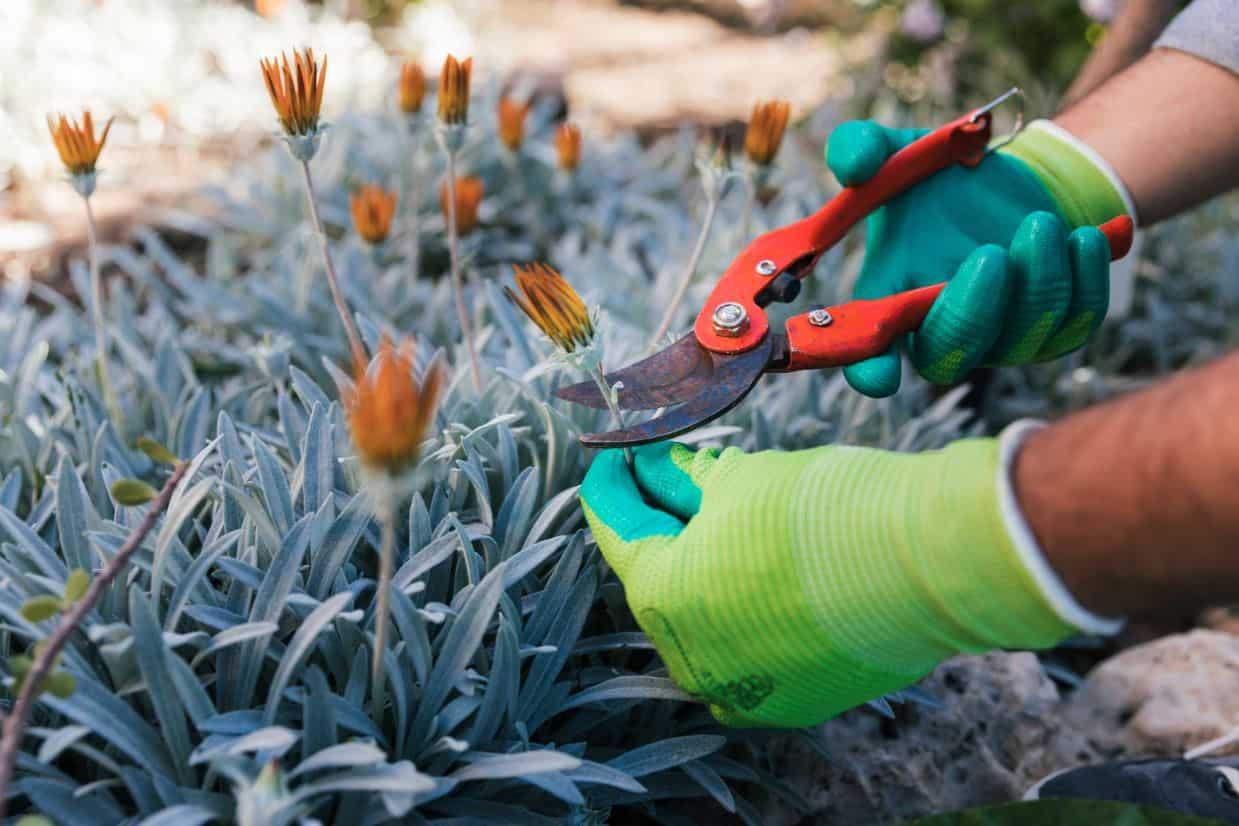 gardening-jobs-for-january-6-tidy-up-your-perennials-freepik