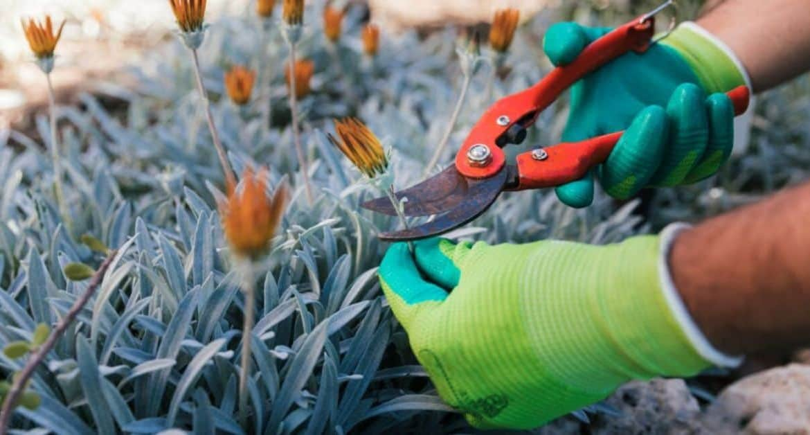 January Jobs To Do In The Garden
