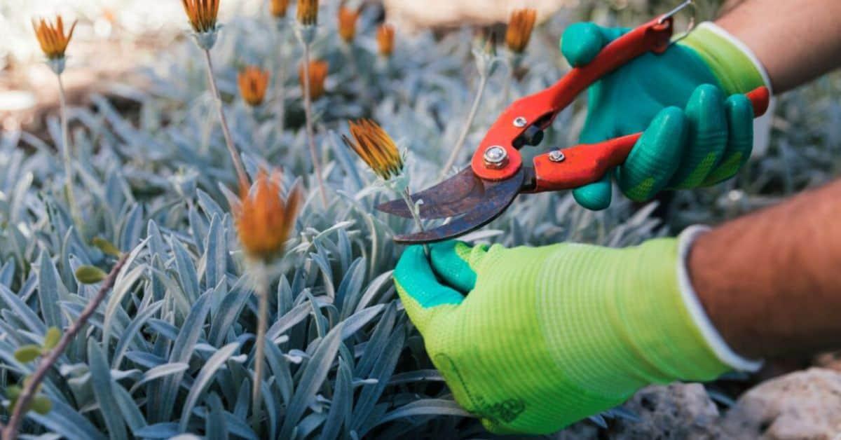 gardening-jobs-for-january-featured-image-freepik