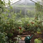 Greenhouse Gardening For Beginners – 7 Essential Tips