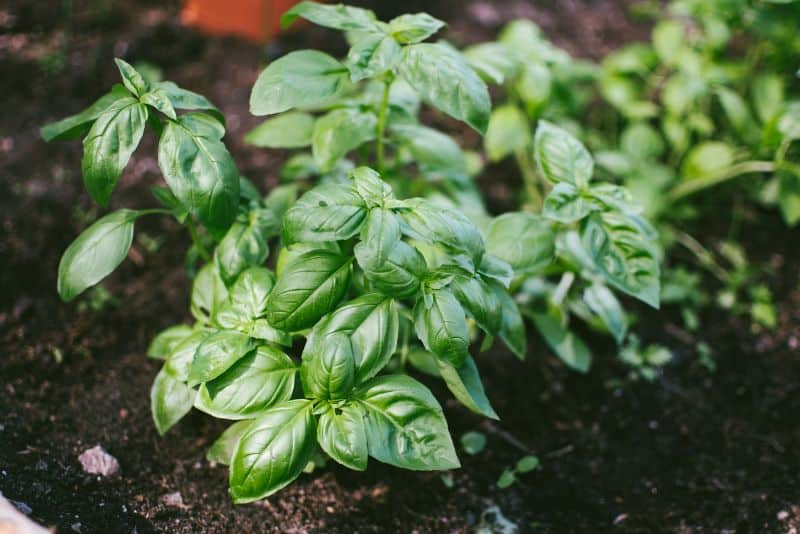 grow-your-own-herbs-2-how-to-grow-your-own-herbs