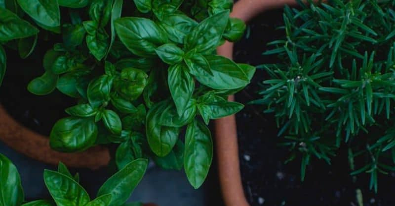 Easy and Quick Ways to Grow Your Own Herbs