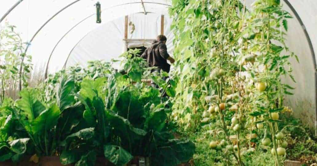 Growing Your Own Vegetable Garden: The Basics