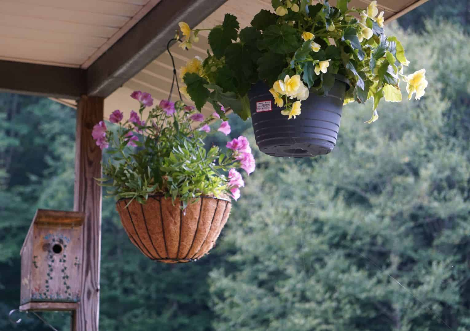 hanging-basket-flowers-1-begonias