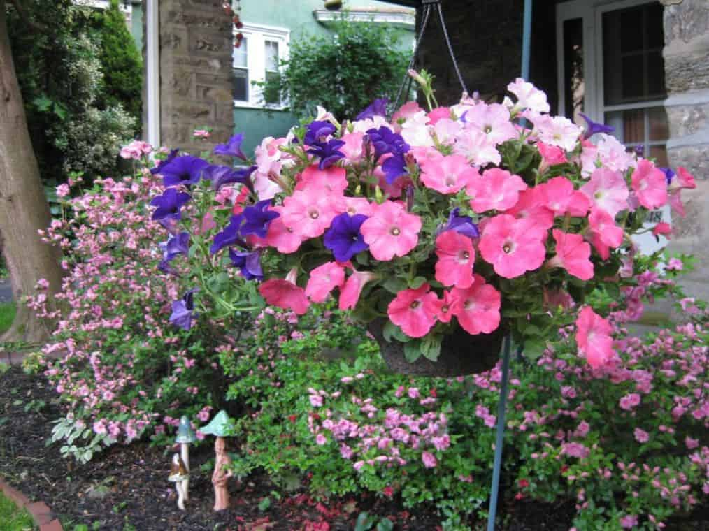 hanging-basket-flowers-3-petunias