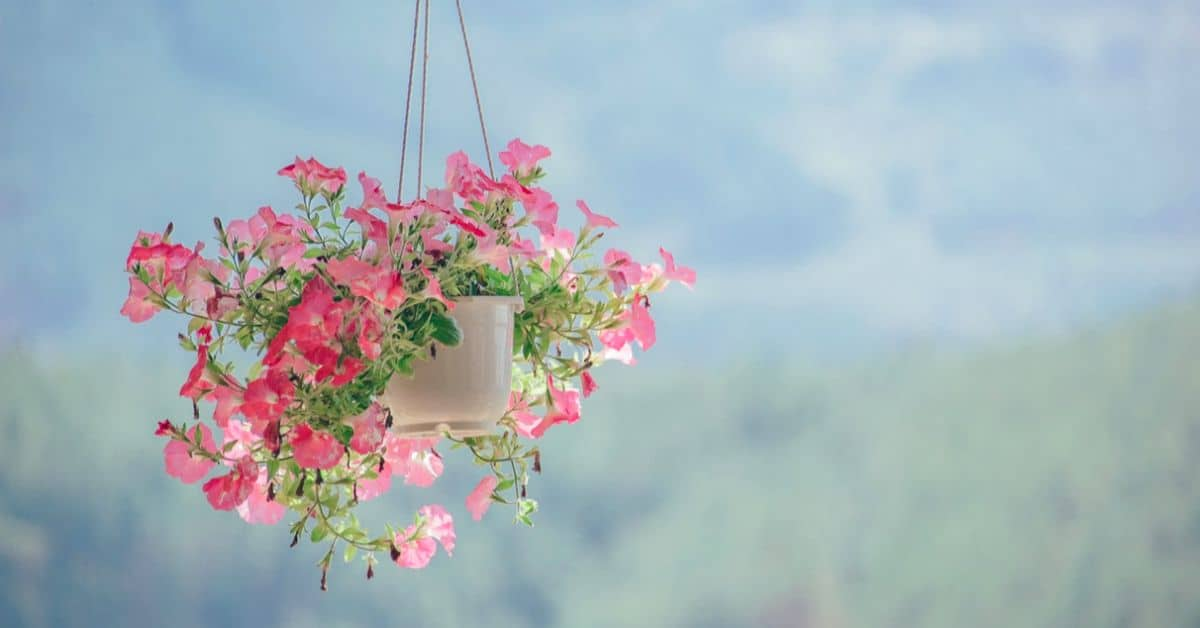 hanging-basket-flowers