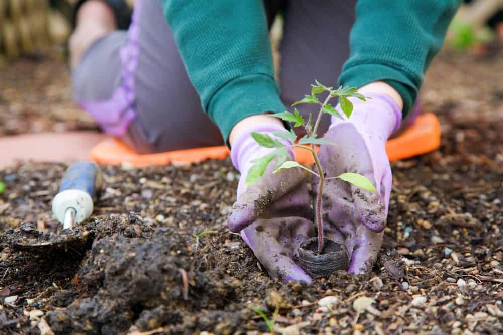 Why Is Gardening Great For Your Health? Our Experts Give Their Opinions