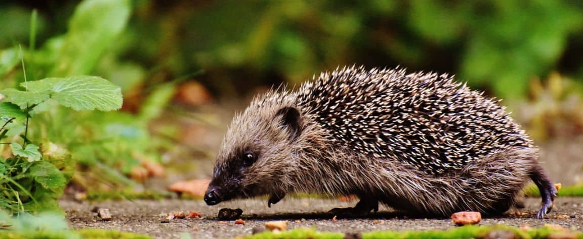 helping-hedgehogs-survive-5-clean-up