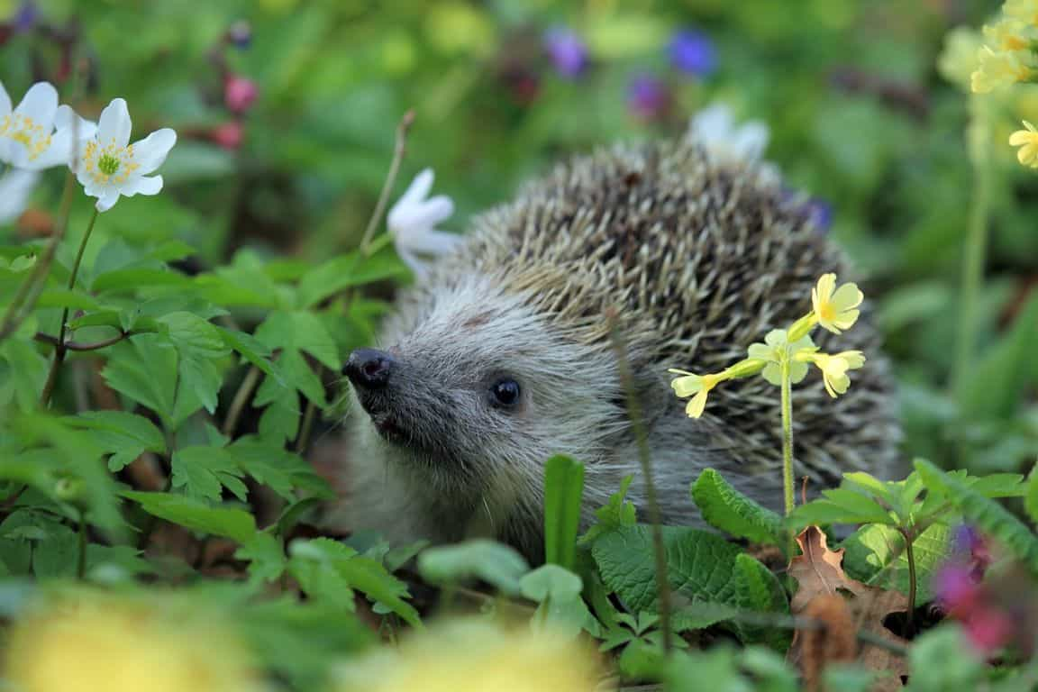 helping-hedgehogs-survive-6-landscaping
