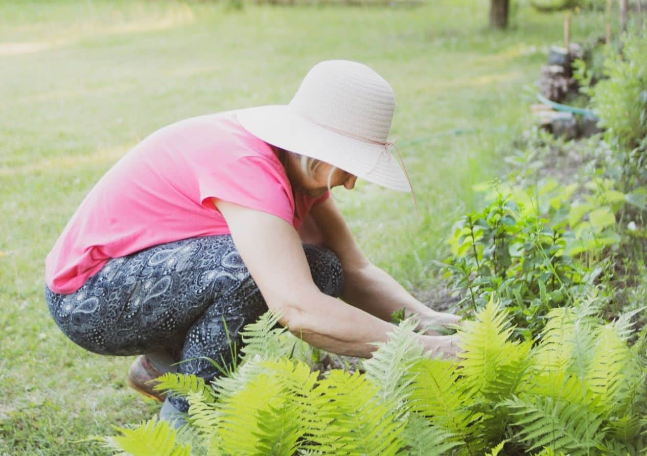 herbal-gardening-health-benefits-3-immune-system