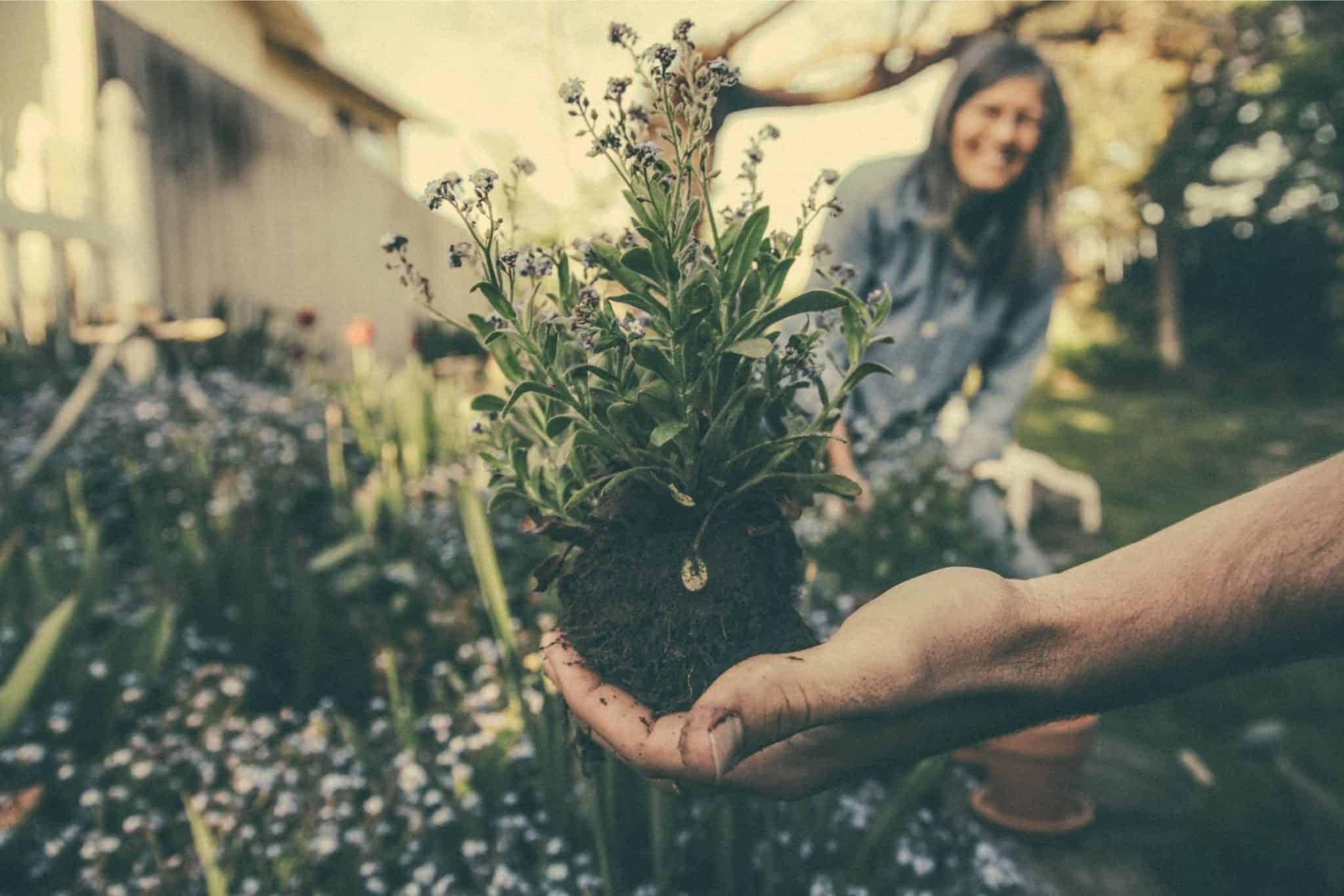herbal-gardening-health-benefits-4-heart-care