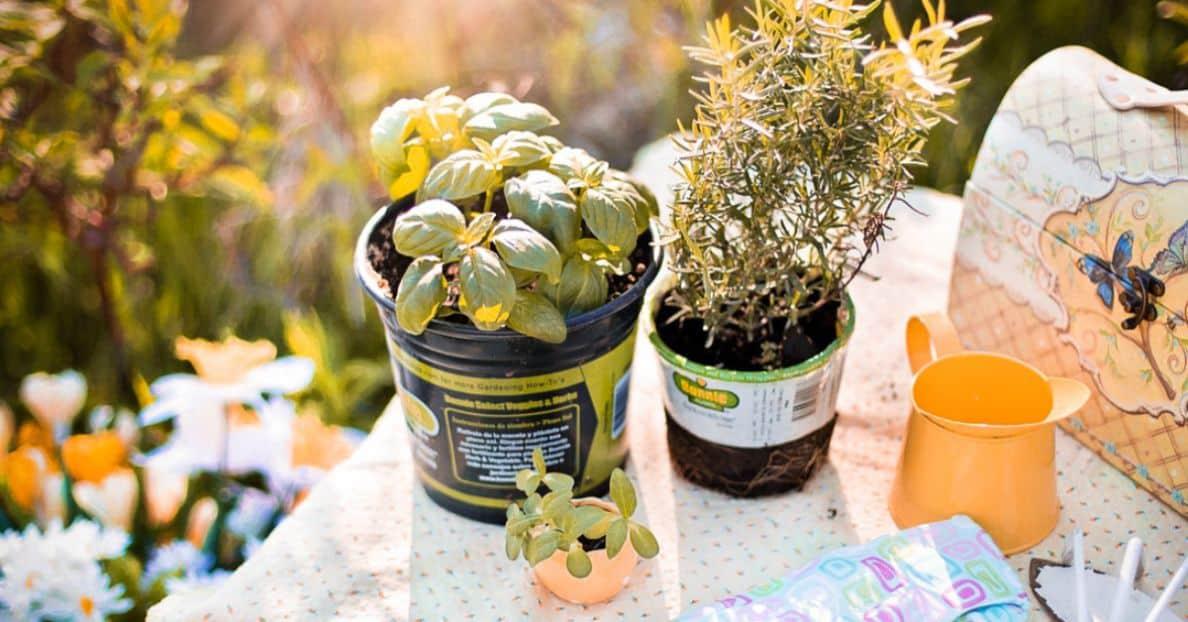 herbal-gardening-health-benefits