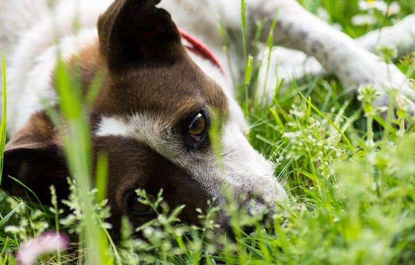 heres-how-you-can-turn-your-garden-dog-friendly-3-plant-dog-friendly-plants