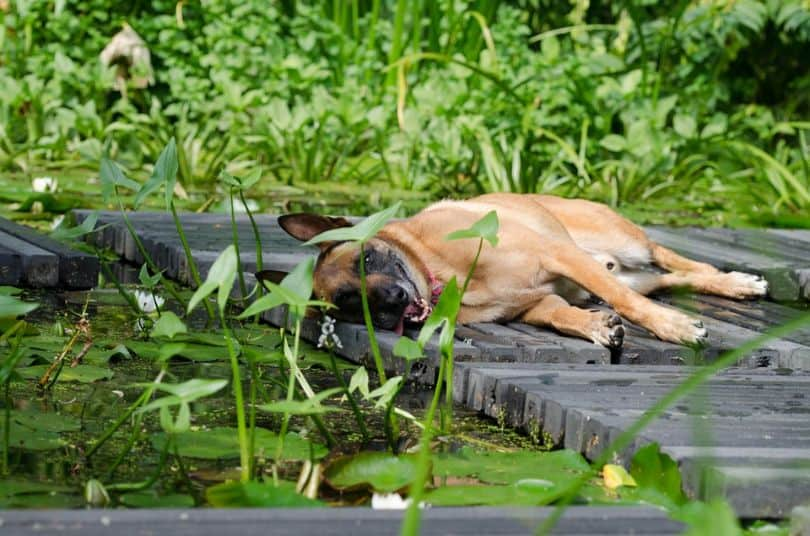 heres-how-you-can-turn-your-garden-dog-friendly-6-protect-your-plants-and-lawn