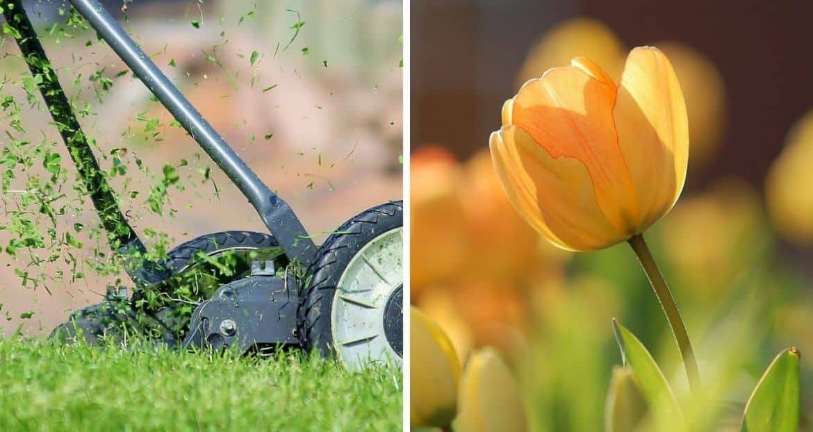 Holiday-Proof Your Garden: Prepare For Heatwave