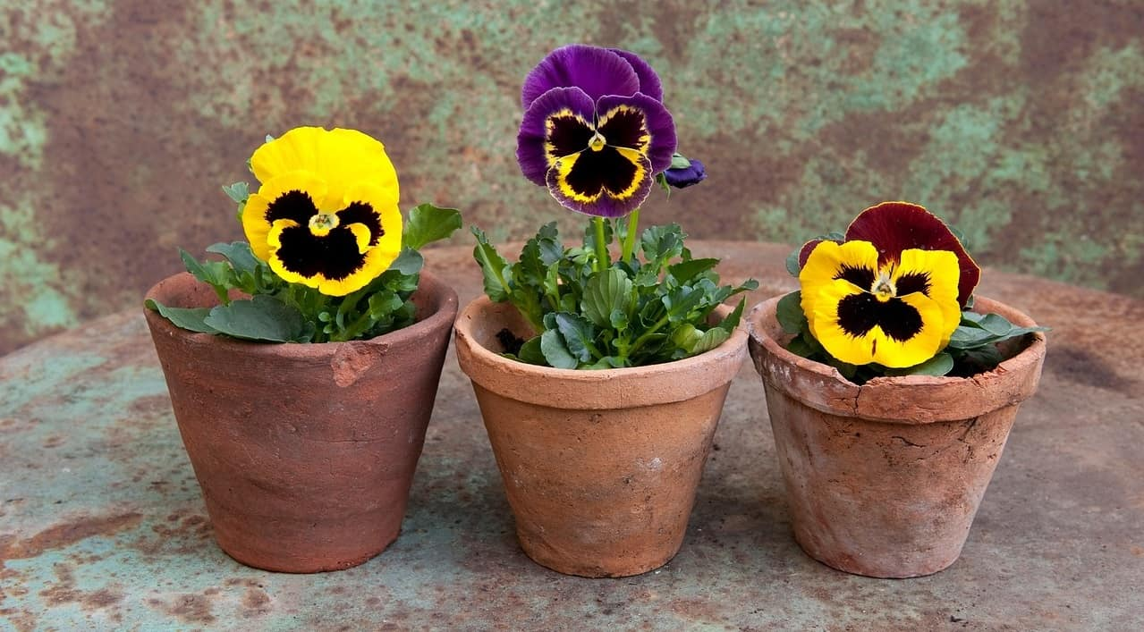 holiday-proof-your-garden-5-group-potted-plants-together