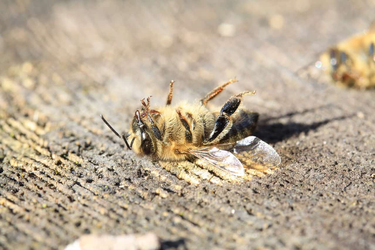 how-you-can-save-the-bees-2-avoid-pesticide