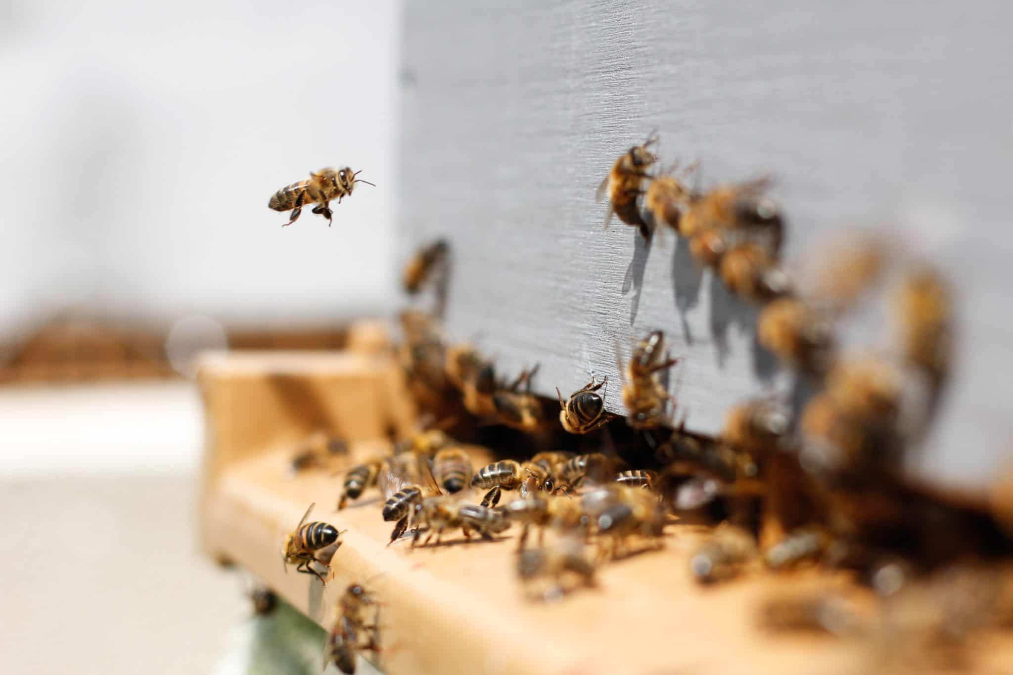 how-you-can-save-the-bees-6-keeping-the-bees