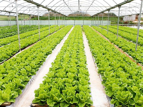 lettuce-with-nice-view-rm_1