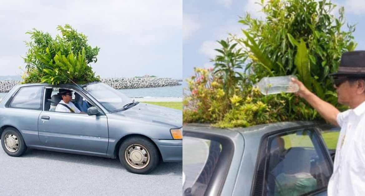 The Man Growing A Garden On His Car Roof!