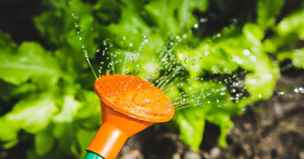 May Gardening Jobs: 8 Tasks to Prepare Garden for Summer
