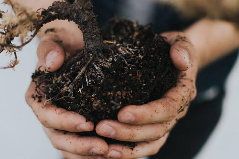 mistakes-garden-novices-should-avoid-4-soil-unsplash