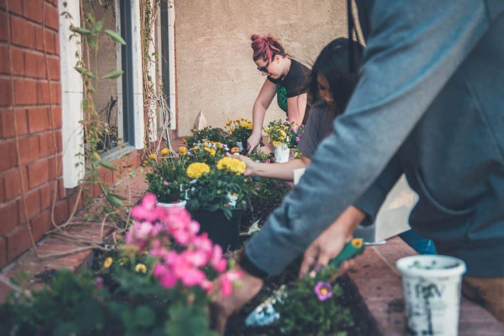 19 Gardening Resolutions You Can Do for 2019