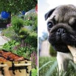 How to Keep Your Pets Safe this BBQ Season