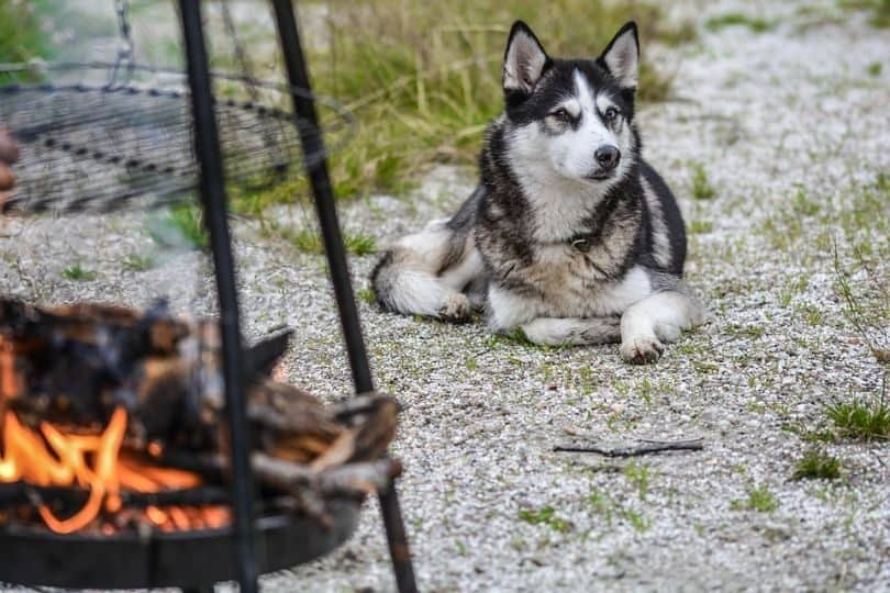 pets-safe-bbq-season-create-boundaries