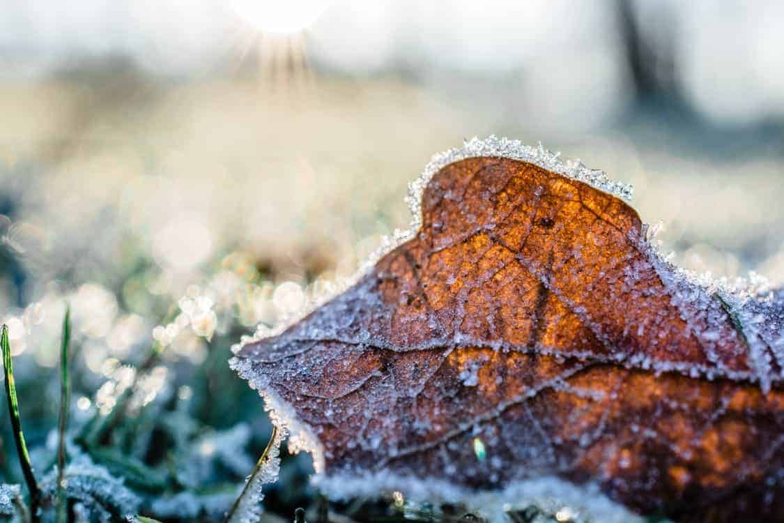 Discover the 18 Top Tips to Winter-Proof Your Garden in 2018