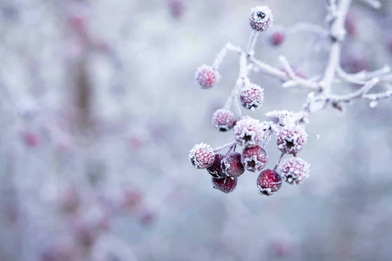 Here Are the Winter Gardening Dos and Don'ts You Must Remember